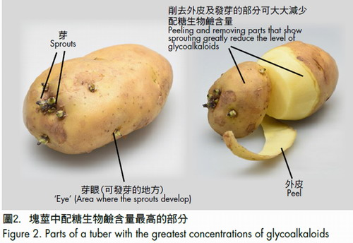 Figure 2. Parts of a tuber with the greatest concentrations of glycoalkaloids