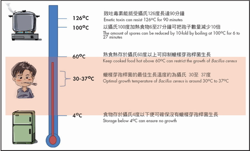 Temperature control to restrict the growth of Bacillus cereus